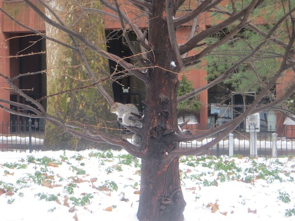 squirrel-tree-along-washington-square-south-snow-31