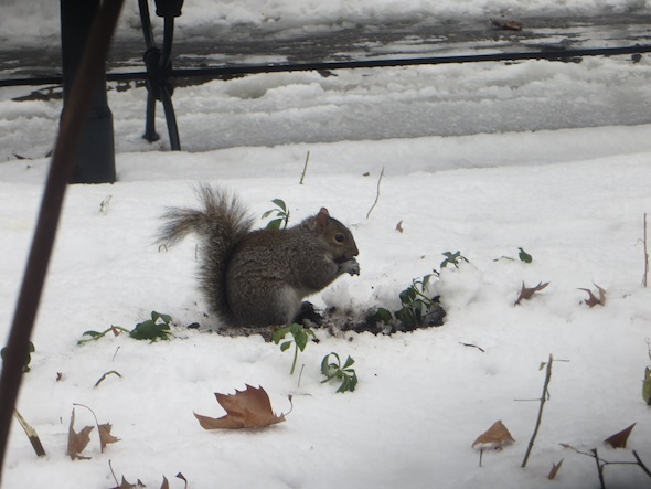 washington-square-park-squirrel-snowtime-19