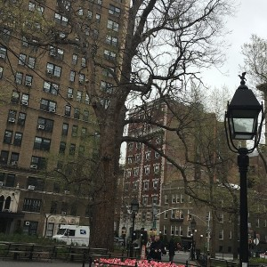 Flora, Fauna & Folk Riots: Jane's Walk Tour of Washington Square Park with WSP Blog & WSP Eco-Projects May 5th