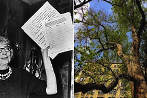 jane-jacobs-trees-janes-walk-washington-square-park
