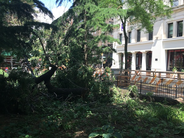 tree down washington square east 1
