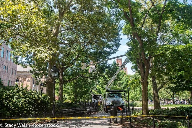 Washington_Square_Park_Tree_Maintenance_1