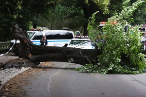 central park tree fell nyc