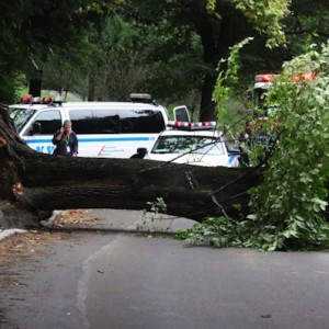 "Central Park ""Conservancy Under Fire"" After Large Elm Tree Falls, Injuring Two People"