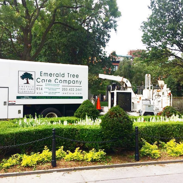 emerald tree care company washington square park 2017