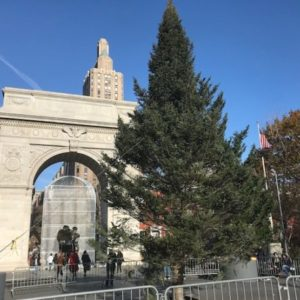 Christmas Tree Arrives at Washington Square Park in New Location | Displaced from Under Arch