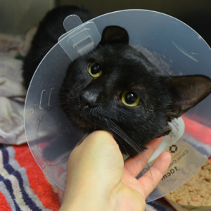 This Cat, Tuna, was Found Wounded in Manhattan Building, Needs Adopter, Only Has Until 12 Noon TODAY