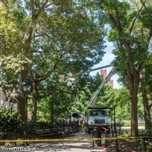 Tree Branch Falls Critically Injuring Woman at Washington Square Park Last Night