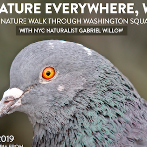 """There's Nature Everywhere"" Guided Nature Walk Through Washington Square Park May 10"