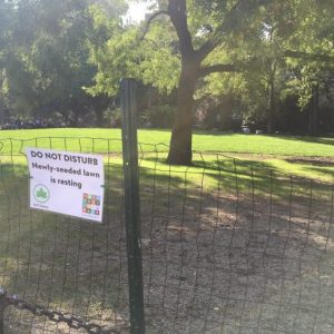 """Making of a Tree Disaster"" at Washington Square Park As NW Lawn is ""Restored"" – Part II"