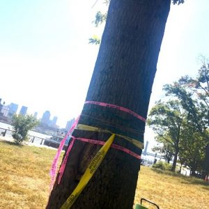 Who Speaks for the Trees at NYC Parks?