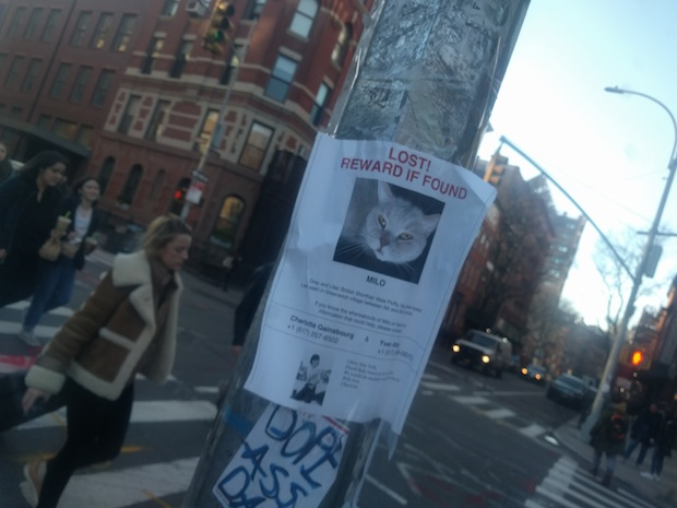 Milo Missing Cat Poster Greenwich Village