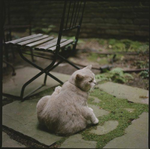 Milo the cat missing in Greenwich Village