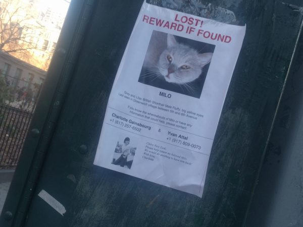 Missing Cat Flyer Milo Greenwich Village